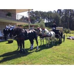 bodas con 4 caballos