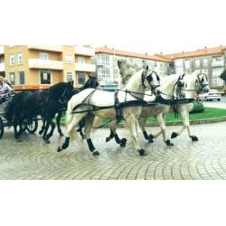 Carro con 5 caballos