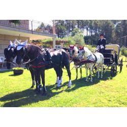Carruaje con  4 caballos