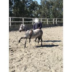 Pony A Welhs