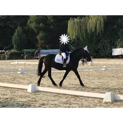 Pony D