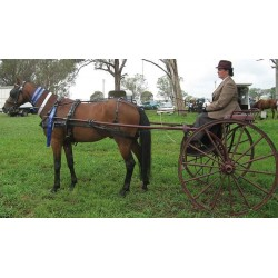 Enganche Classic - Single Sets PONY