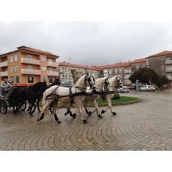 bodas de 5 caballos