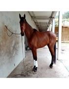 compra venta caballo caballos