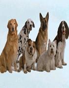 PIENSO DE PERROS y GATOS (mascotas)