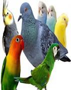 Comida para palomas y otras aves